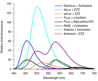 The Brightest Red Shifted Luciferase Luciferin